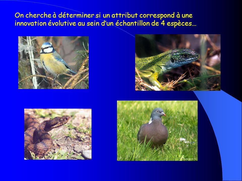 On cherche à déterminer si un attribut correspond à une innovation évolutive au sein d'un échantillon de 4 espèces…