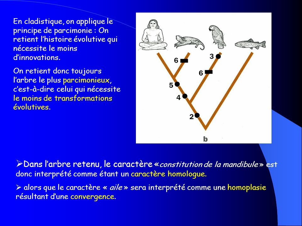 En cladistique, on applique le principe de parcimonie : On retient l'histoire évolutive qui nécessite le moins d'innovations.
