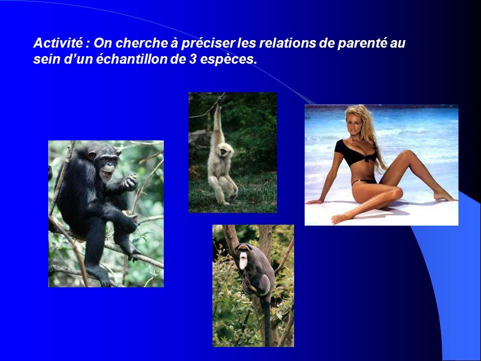 Activité : On cherche à préciser les relations de parenté au sein d'un échantillon de 3 espèces.