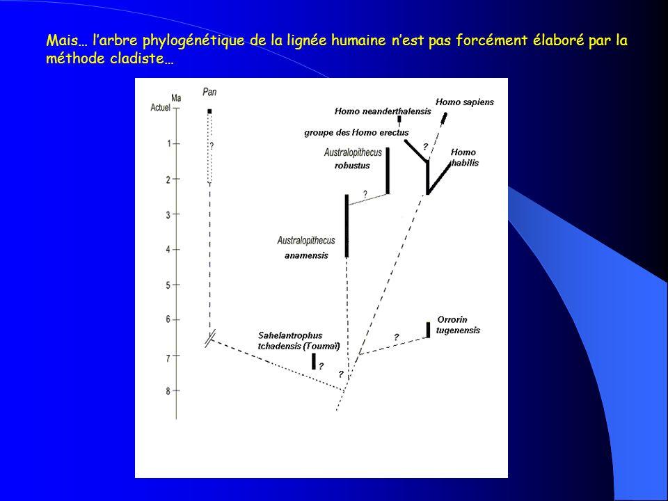 Mais… l'arbre phylogénétique de la lignée humaine n'est pas forcément élaboré par la méthode cladiste…