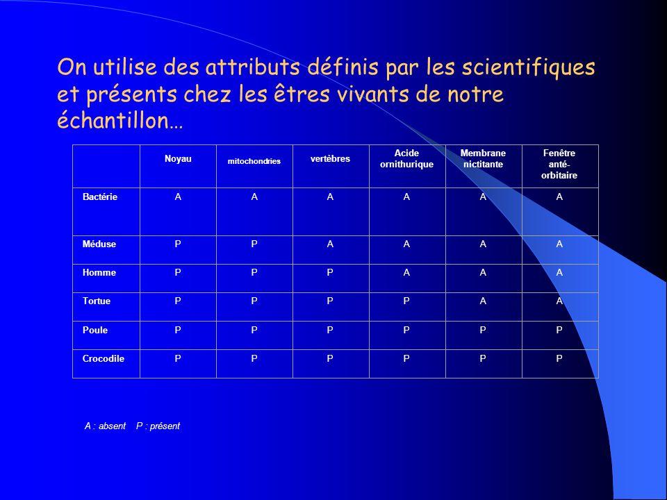 On utilise des attributs définis par les scientifiques et présents chez les êtres vivants de notre échantillon…
