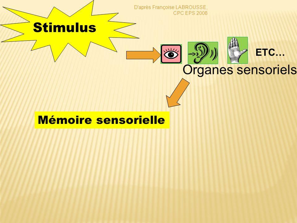 Stimulus Organes sensoriels Mémoire sensorielle ETC… CLIC