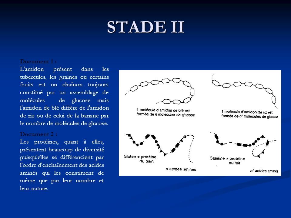 STADE IIDocument 1 :