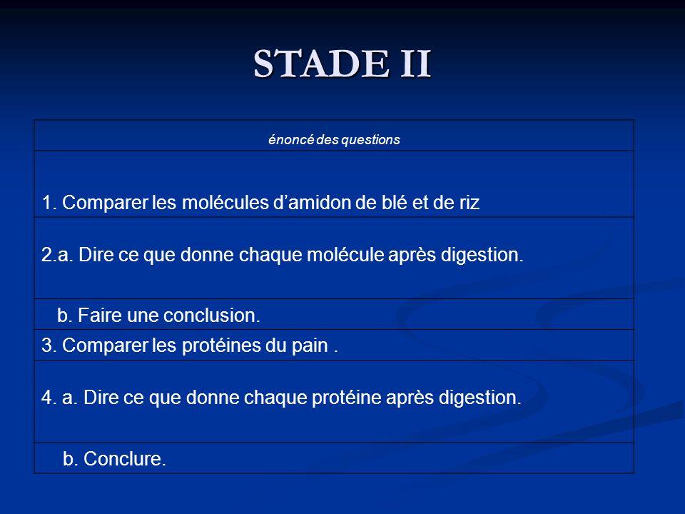 STADE II 1. Comparer les molécules d'amidon de blé et de riz