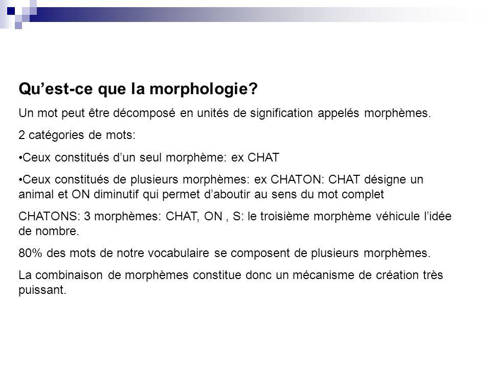 Qu'est-ce que la morphologie