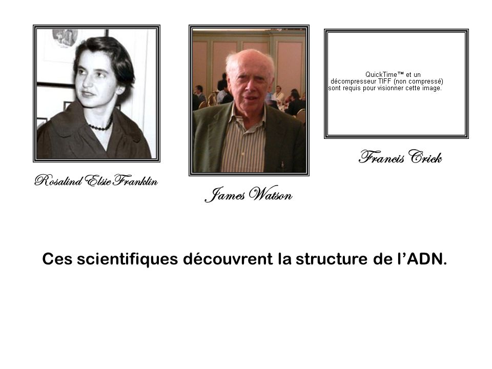 Francis Crick James Watson Rosalind Elsie Franklin