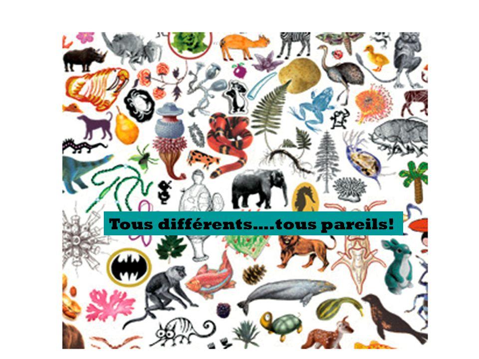Tous différents….tous pareils!