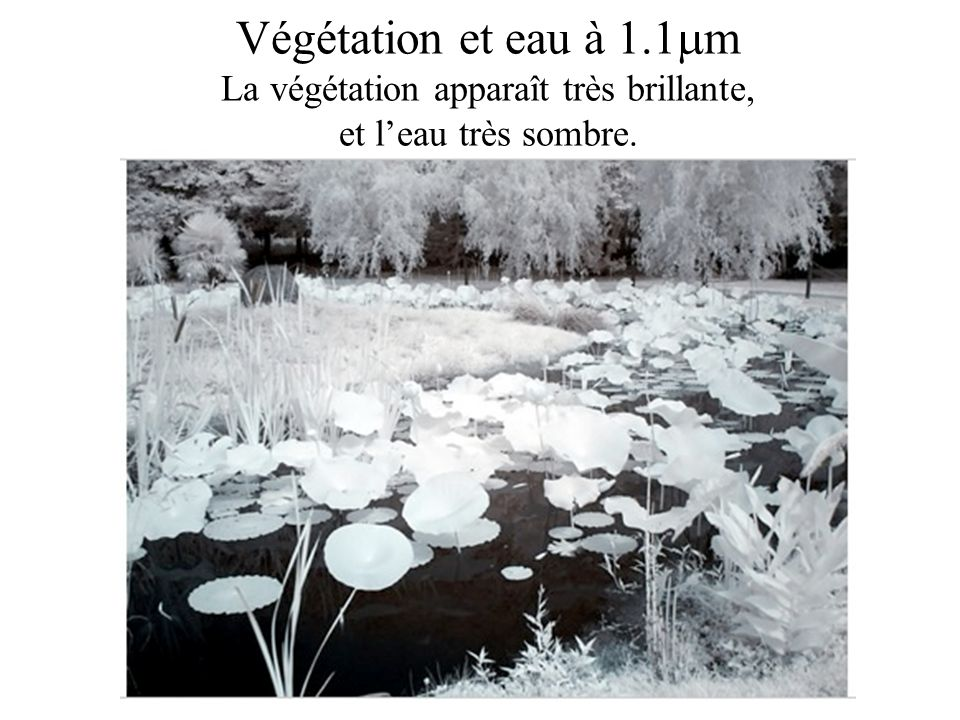 Végétation et eau à 1.1m La végétation apparaît très brillante, et l'eau très sombre.