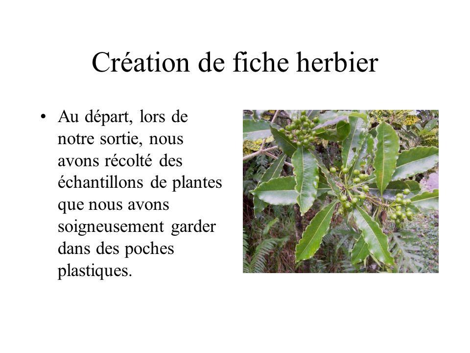 Création de fiche herbier