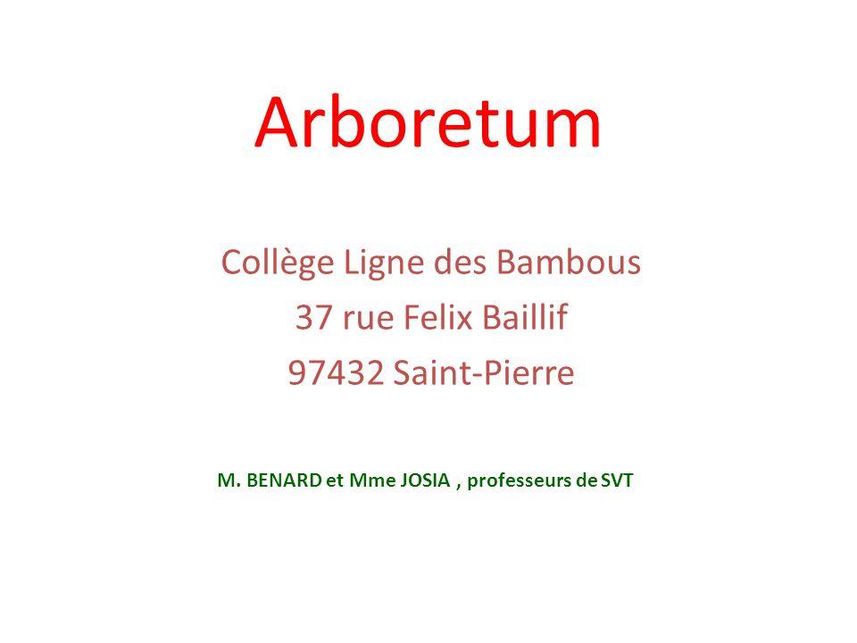 Collège Ligne des Bambous 37 rue Felix Baillif 97432 Saint-Pierre