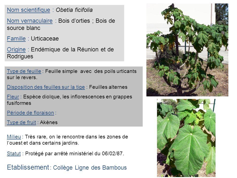 Etablissement : Collège Ligne des Bambous