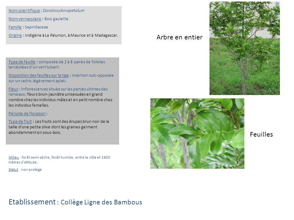 Préférence Collège Ligne des Bambous 37 rue Felix Baillif Saint-Pierre - ppt  SL35