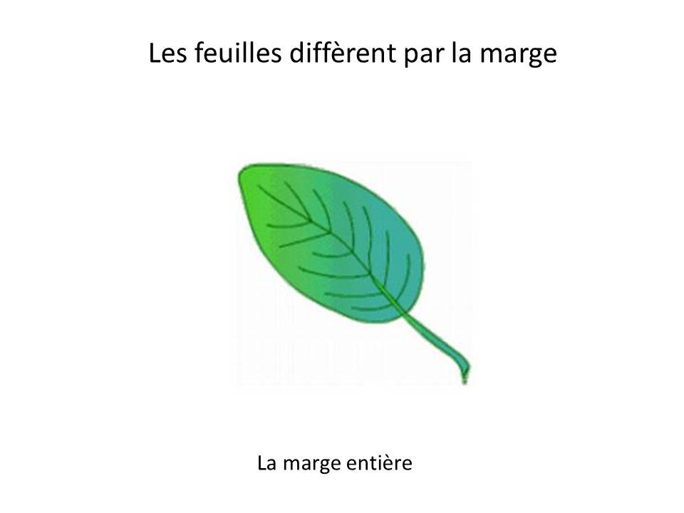 Les feuilles diffèrent par la marge