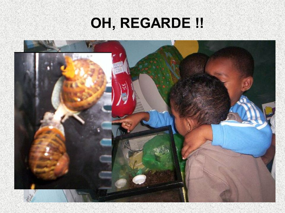 OH, REGARDE !!