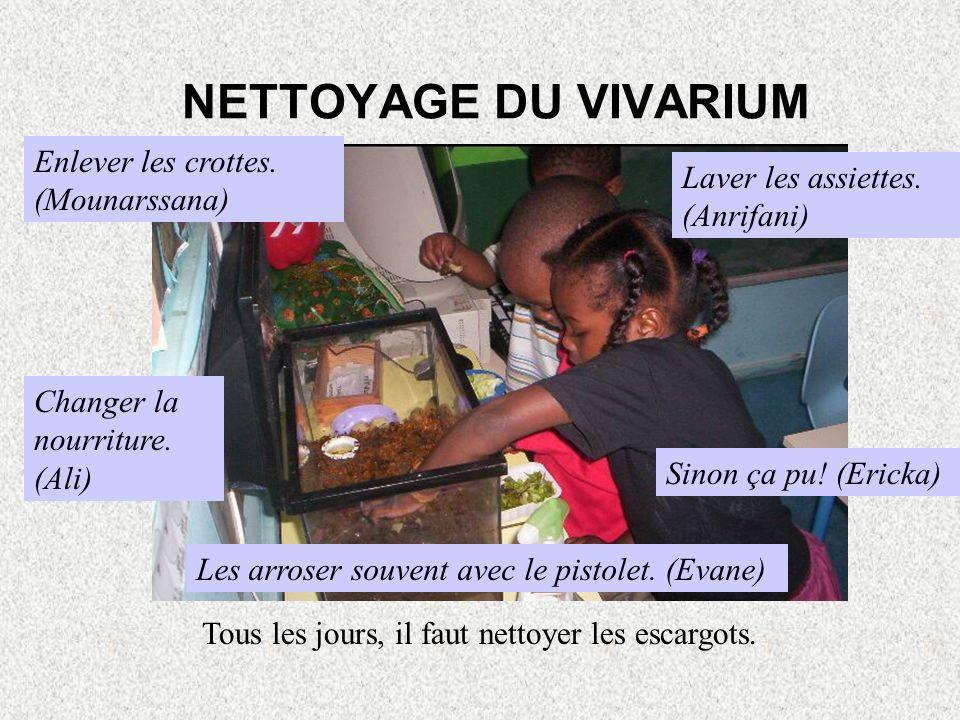 NETTOYAGE DU VIVARIUM Enlever les crottes. (Mounarssana)