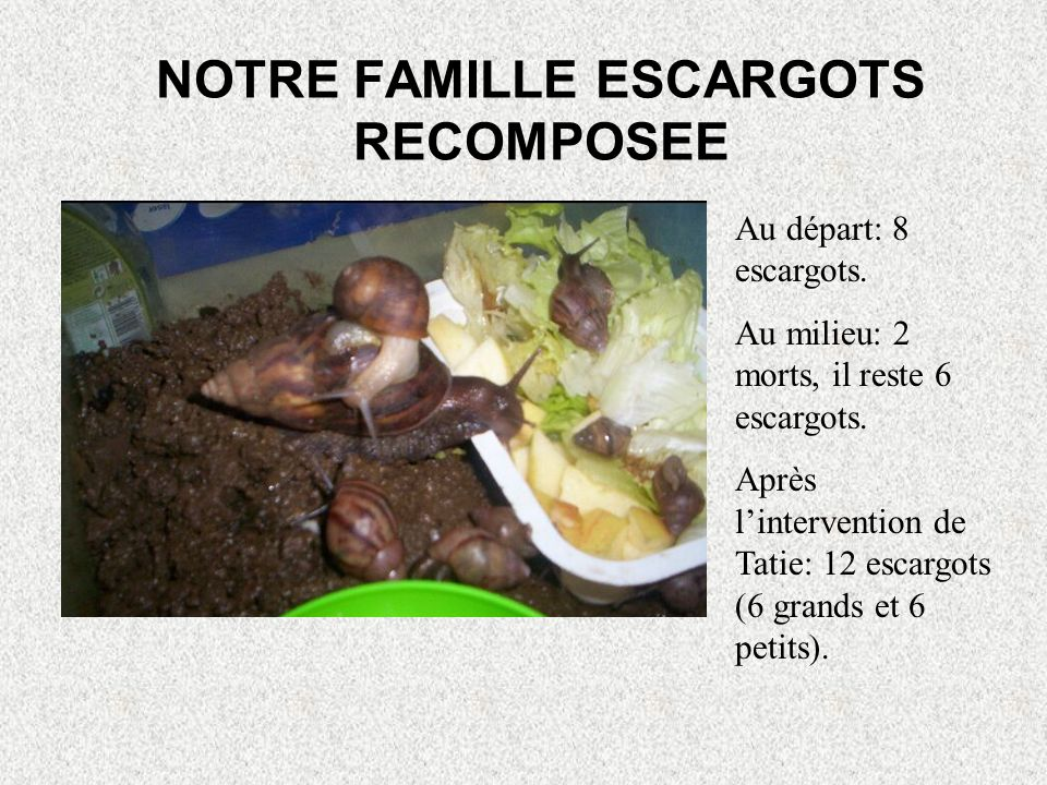 NOTRE FAMILLE ESCARGOTS RECOMPOSEE