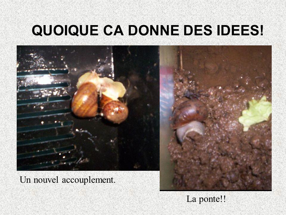 QUOIQUE CA DONNE DES IDEES!