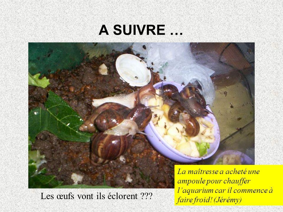 A SUIVRE … Les œufs vont ils éclorent