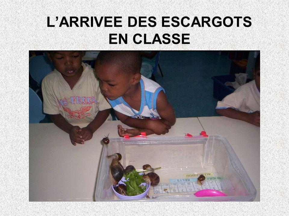 L'ARRIVEE DES ESCARGOTS EN CLASSE