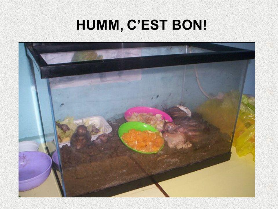 HUMM, C'EST BON!