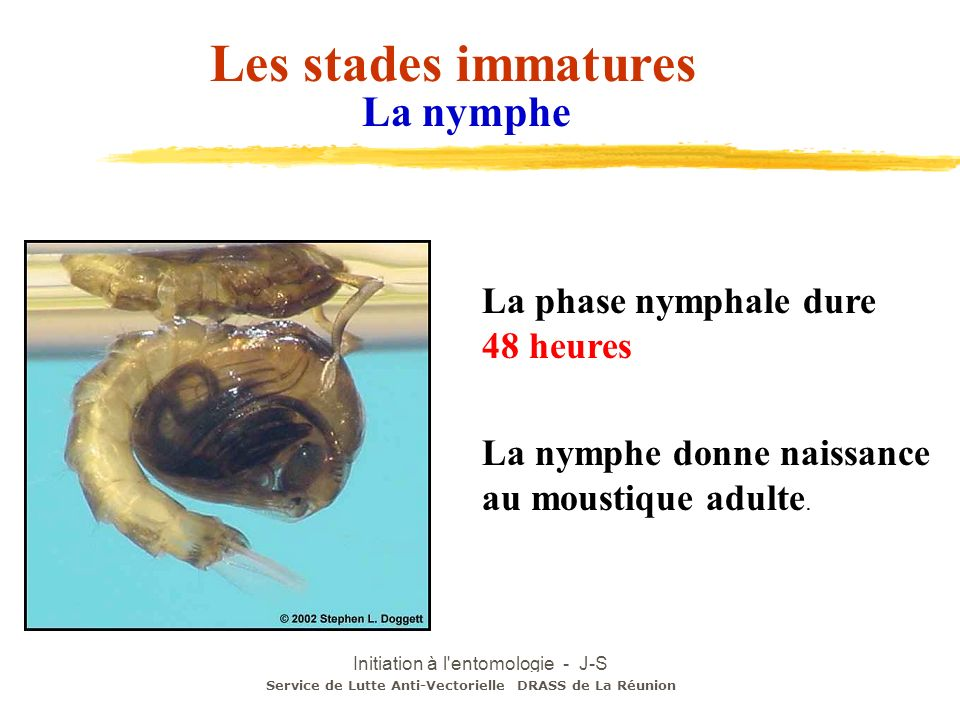 Initiation à l entomologie - J-S DEHECQ