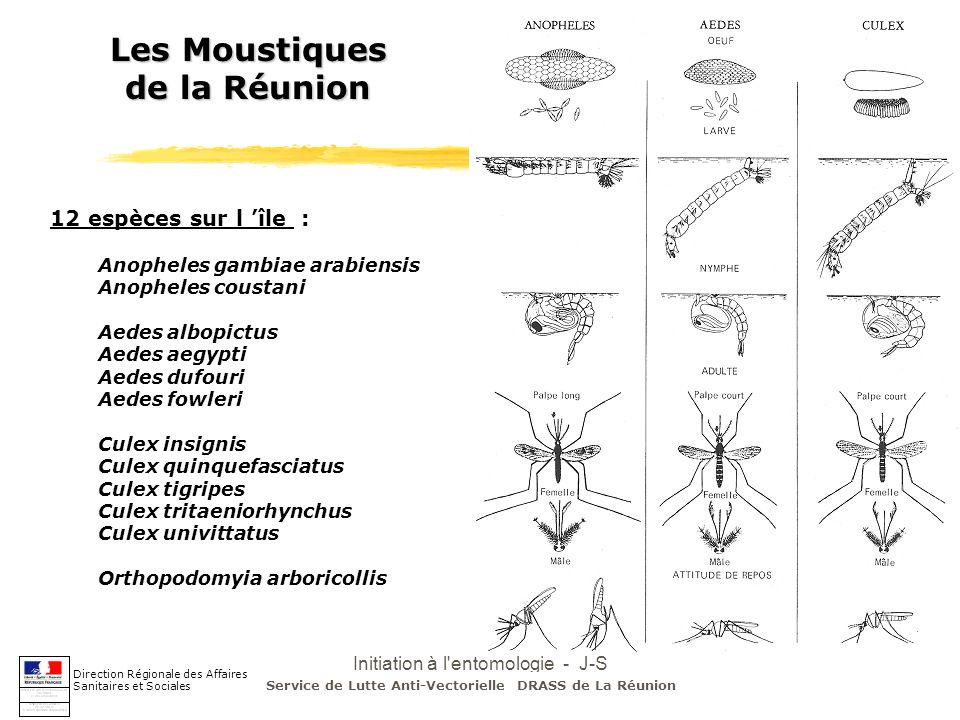 Les Moustiques de la Réunion