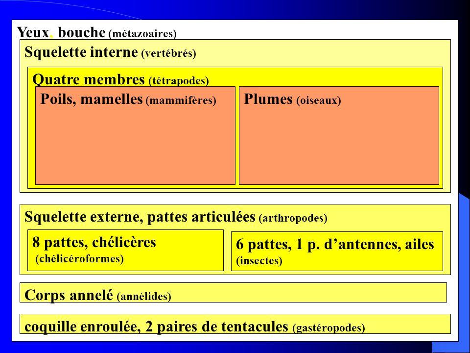 Yeux, bouche (métazoaires) Squelette interne (vertébrés)