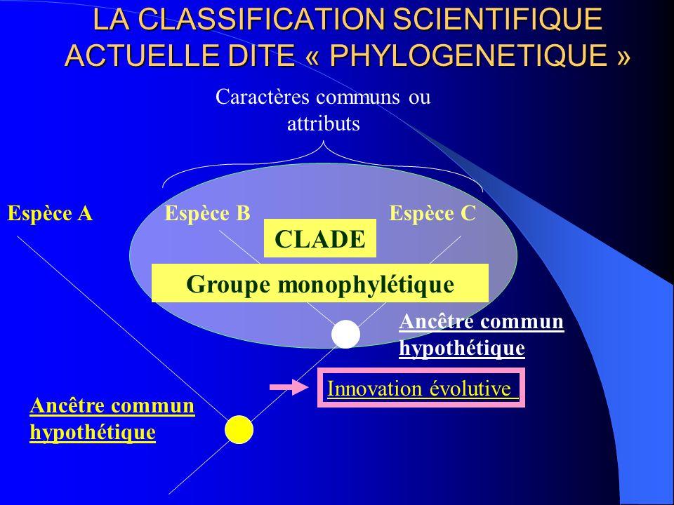 LA CLASSIFICATION SCIENTIFIQUE ACTUELLE DITE « PHYLOGENETIQUE »