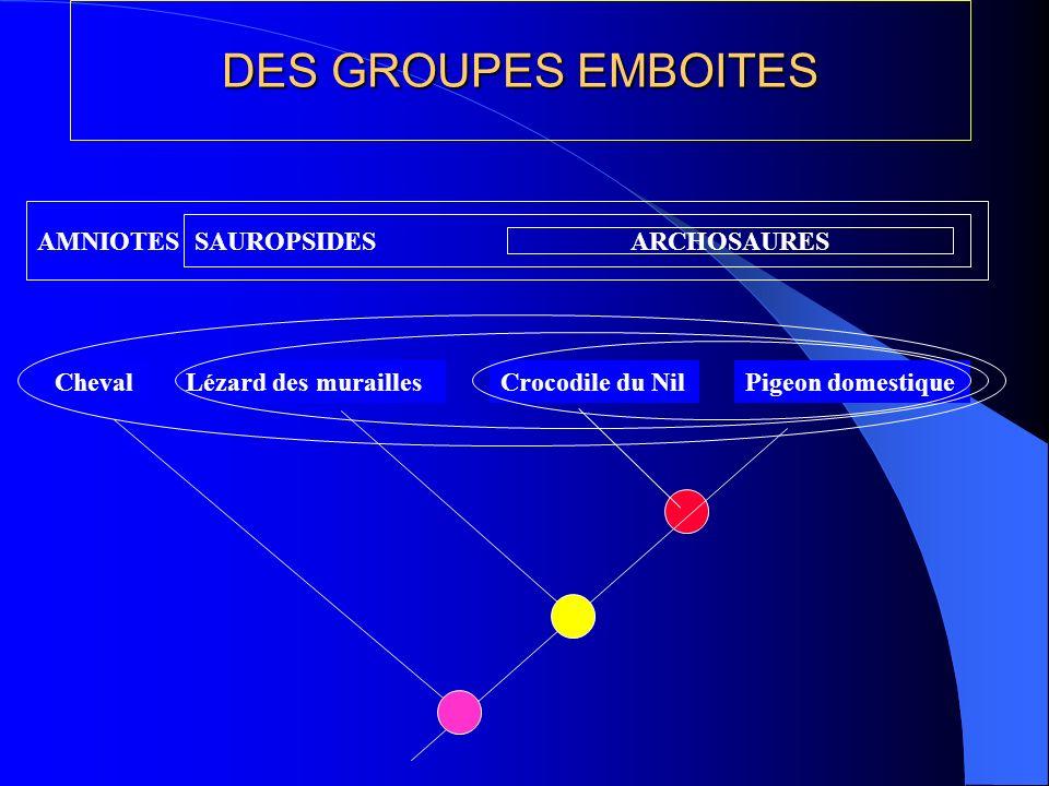 DES GROUPES EMBOITES AMNIOTES SAUROPSIDES ARCHOSAURES Cheval