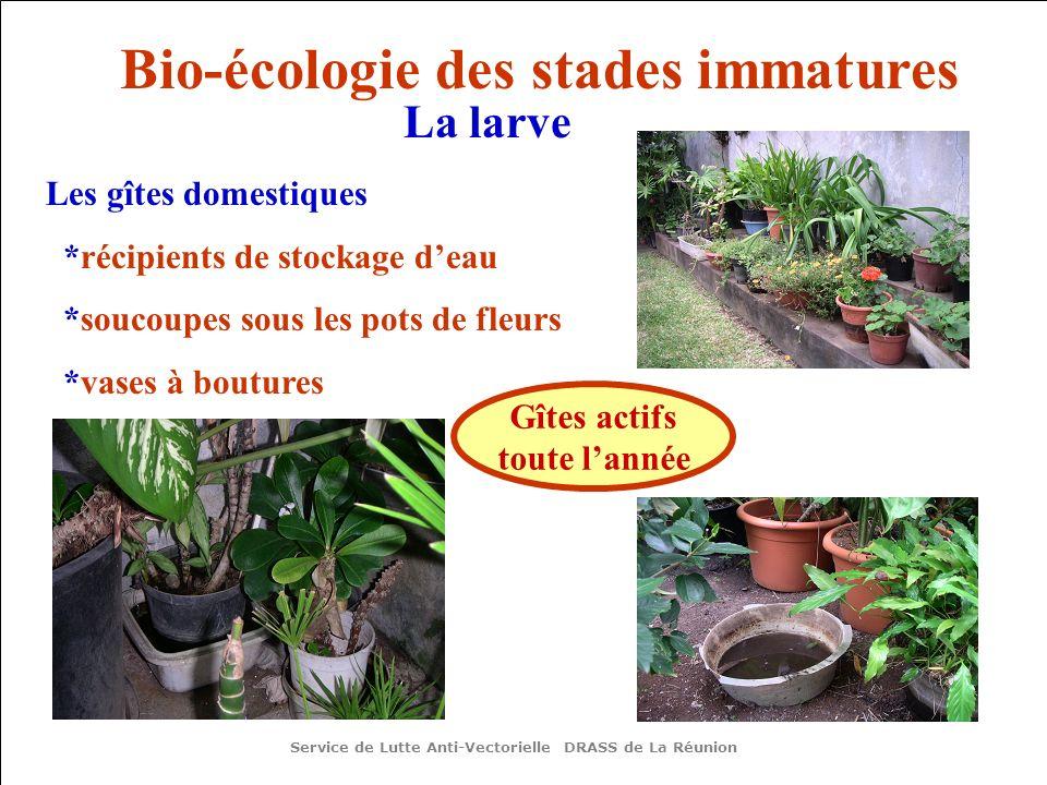 Bio-écologie des stades immatures