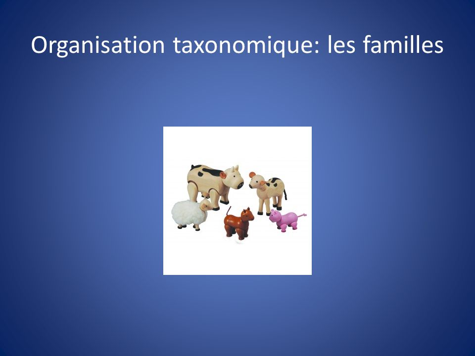 Organisation taxonomique: les familles