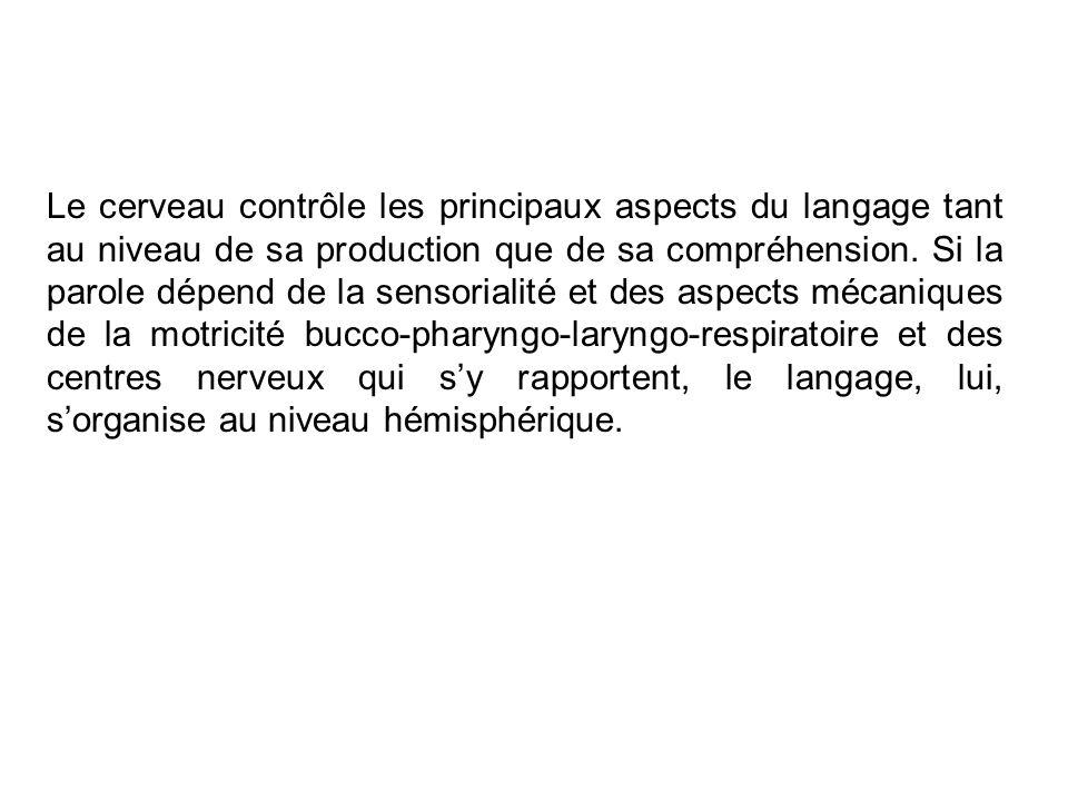 Le cerveau contrôle les principaux aspects du langage tant au niveau de sa production que de sa compréhension.