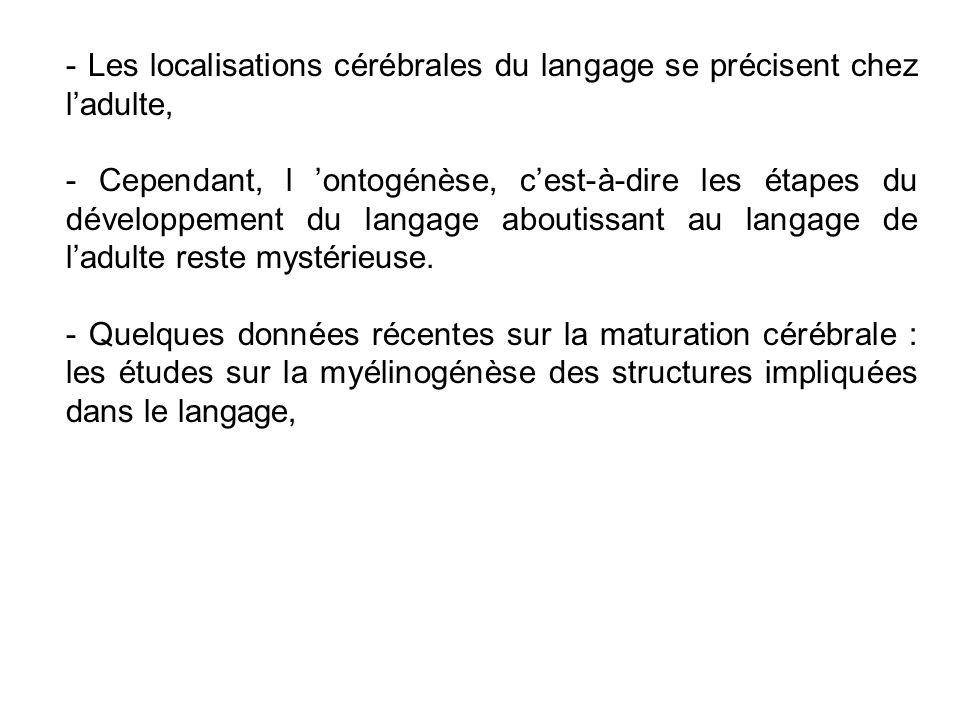 - Les localisations cérébrales du langage se précisent chez l'adulte,