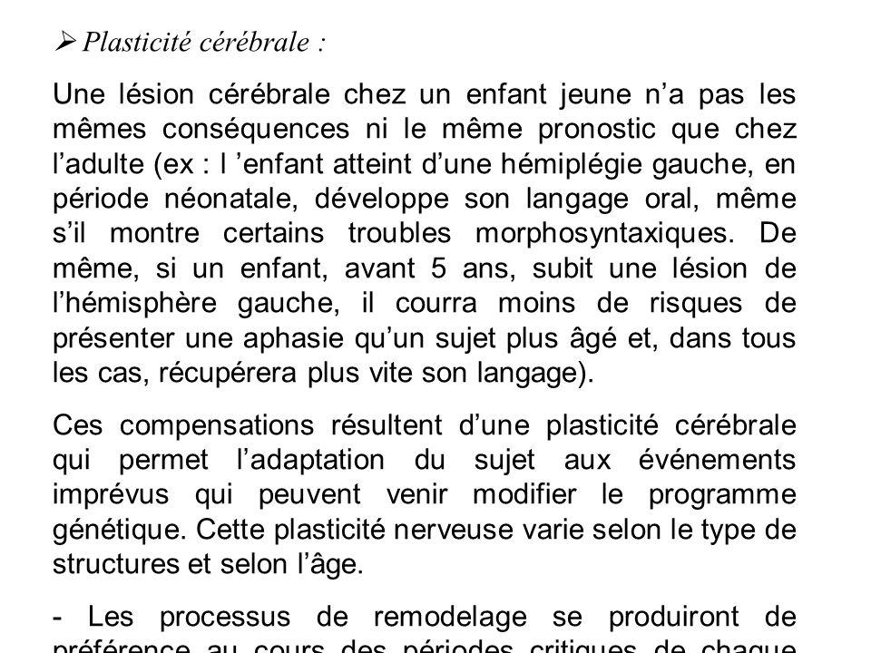  Plasticité cérébrale :