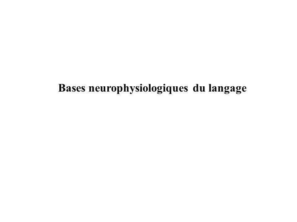 Bases neurophysiologiques du langage