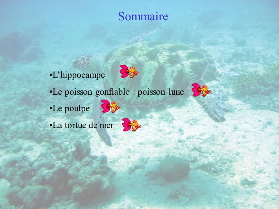Sommaire L'hippocampe Le poisson gonflable : poisson lune Le poulpe