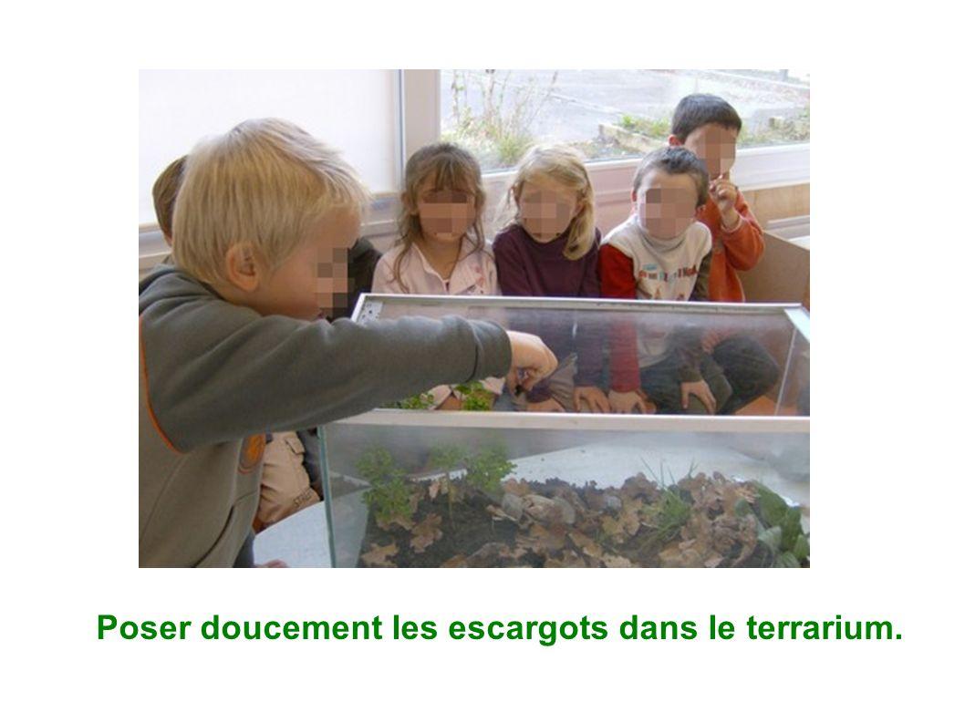 Poser doucement les escargots dans le terrarium.
