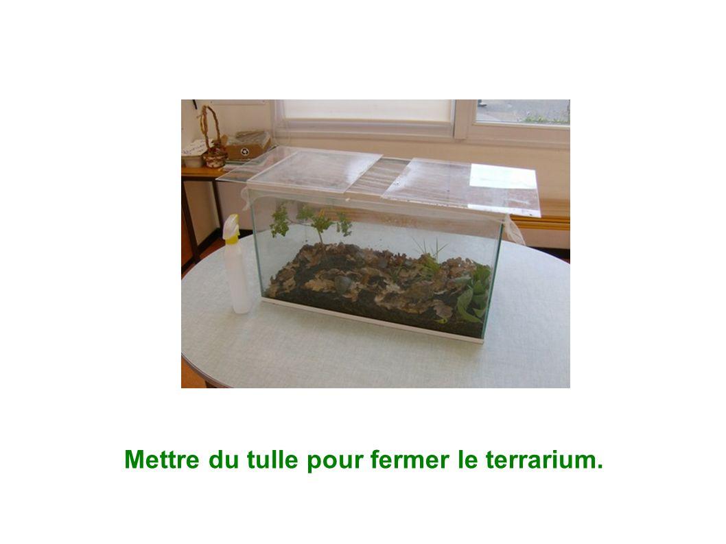 Mettre du tulle pour fermer le terrarium.