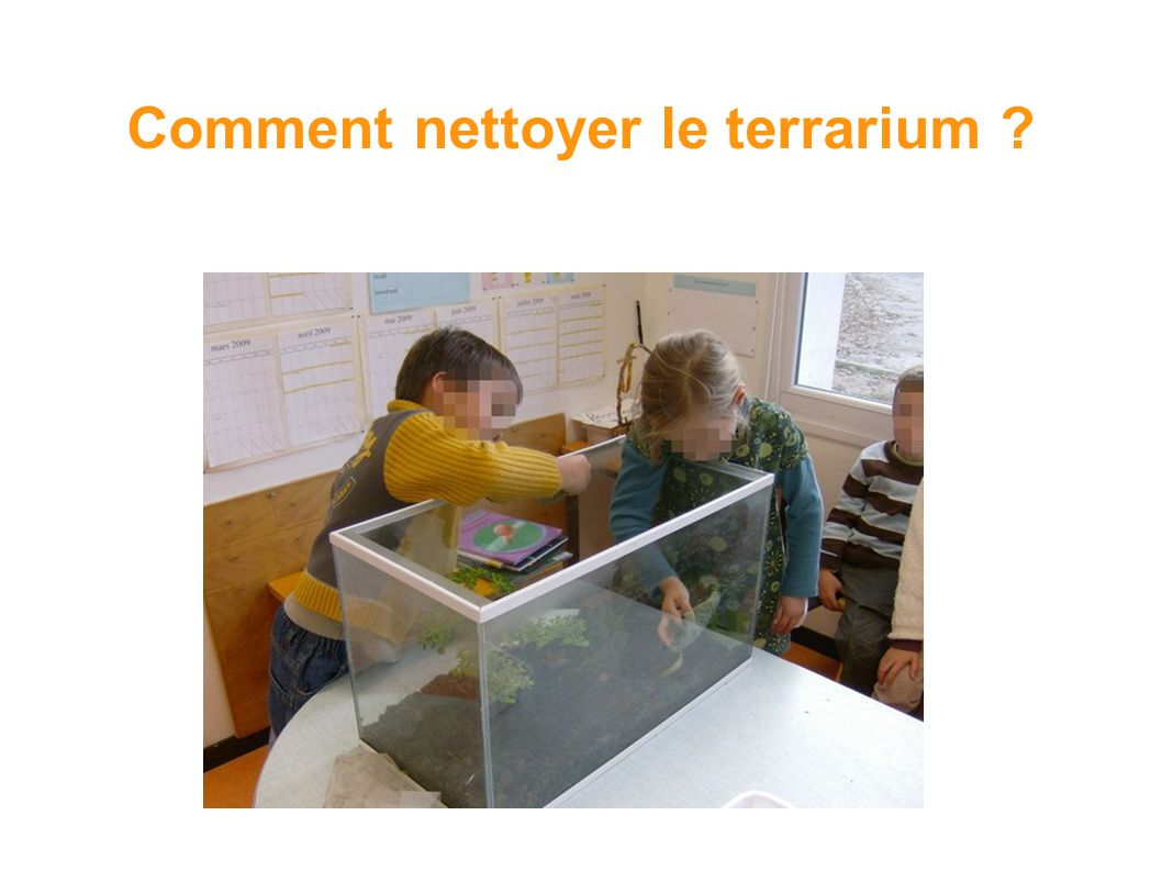 le terrarium des escargots ppt video online t l charger. Black Bedroom Furniture Sets. Home Design Ideas