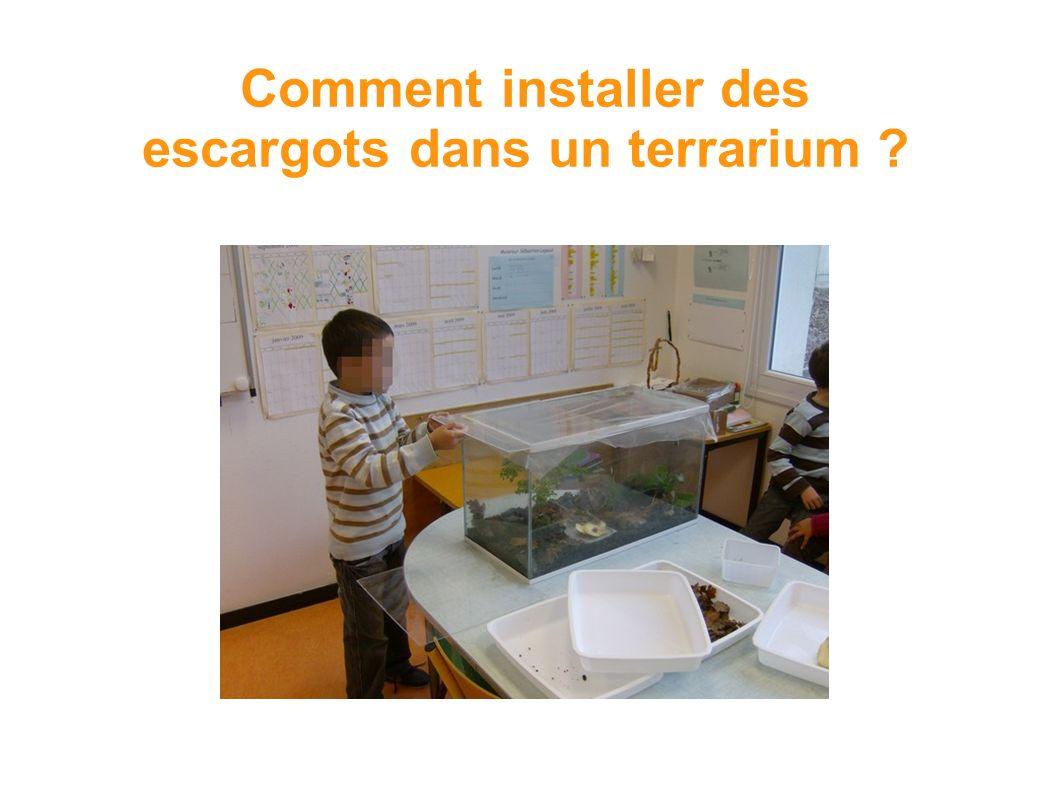 Comment installer des escargots dans un terrarium