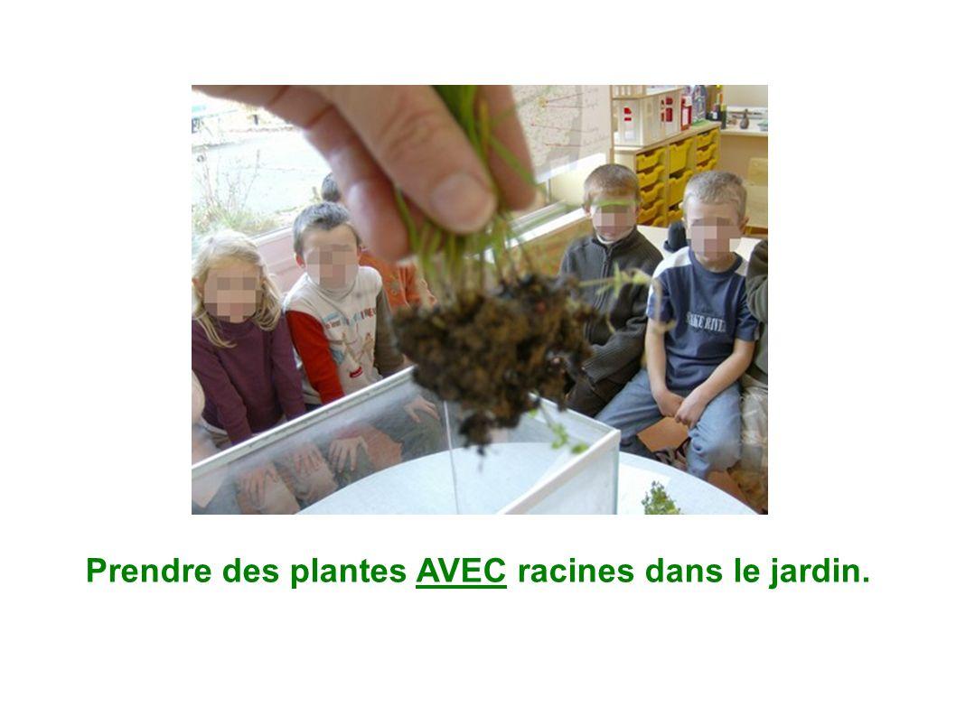Prendre des plantes AVEC racines dans le jardin.