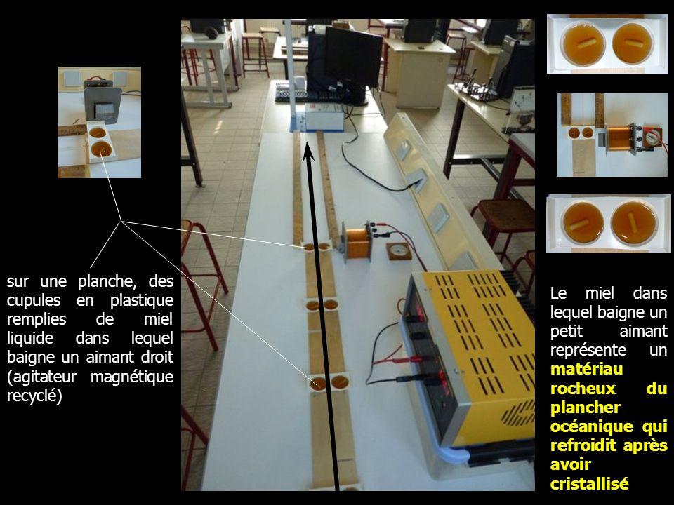 sur une planche, des cupules en plastique remplies de miel liquide dans lequel baigne un aimant droit (agitateur magnétique recyclé)