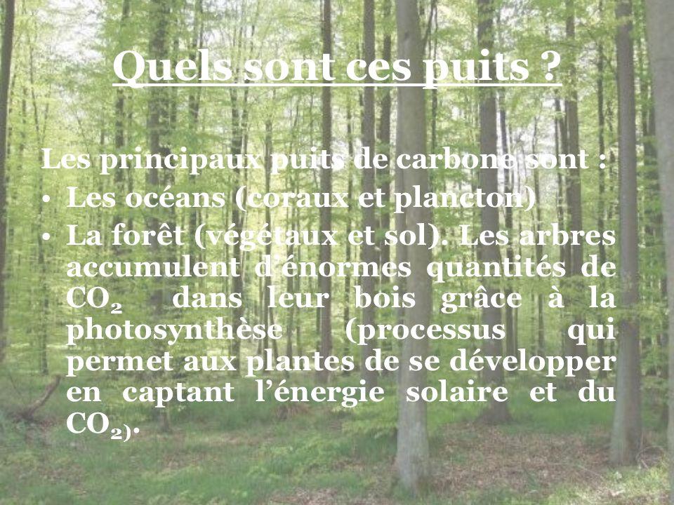Quels sont ces puits Les principaux puits de carbone sont :
