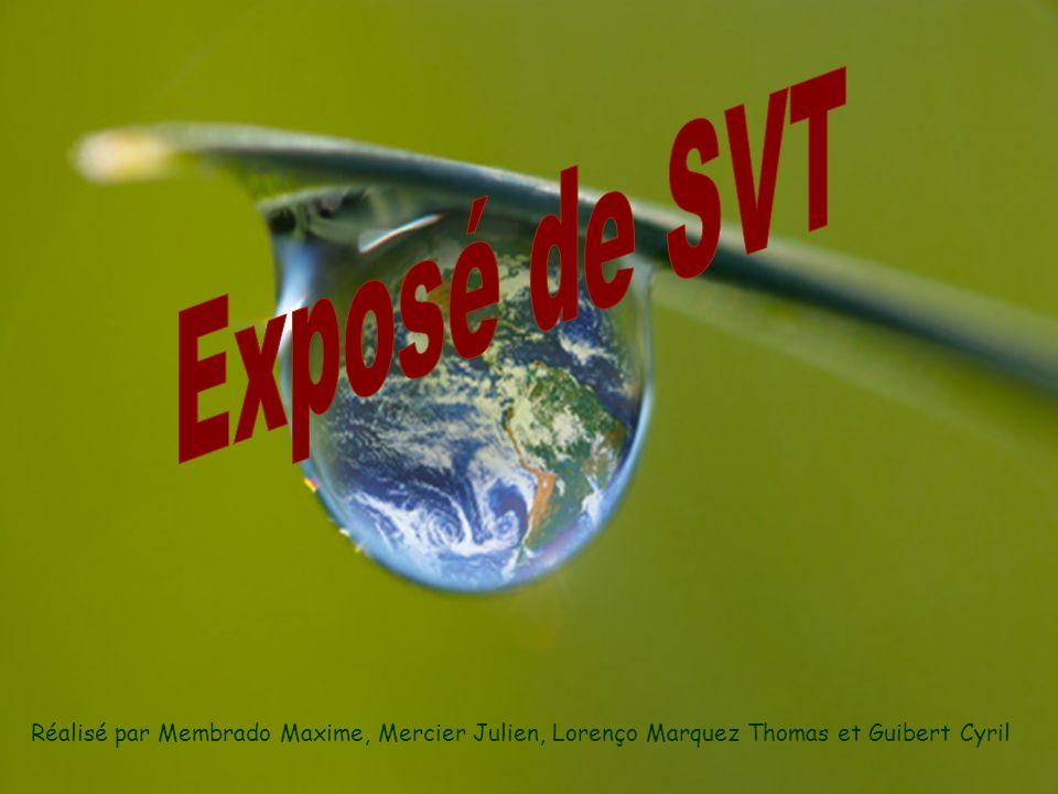 Exposé de SVT Réalisé par Membrado Maxime, Mercier Julien, Lorenço Marquez Thomas et Guibert Cyril
