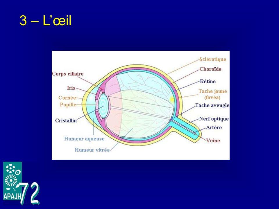3 – L'œil