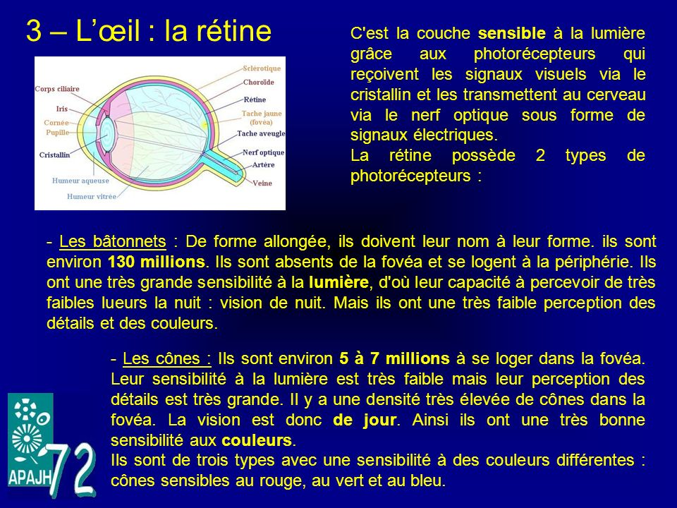 3 – L'œil : la rétine