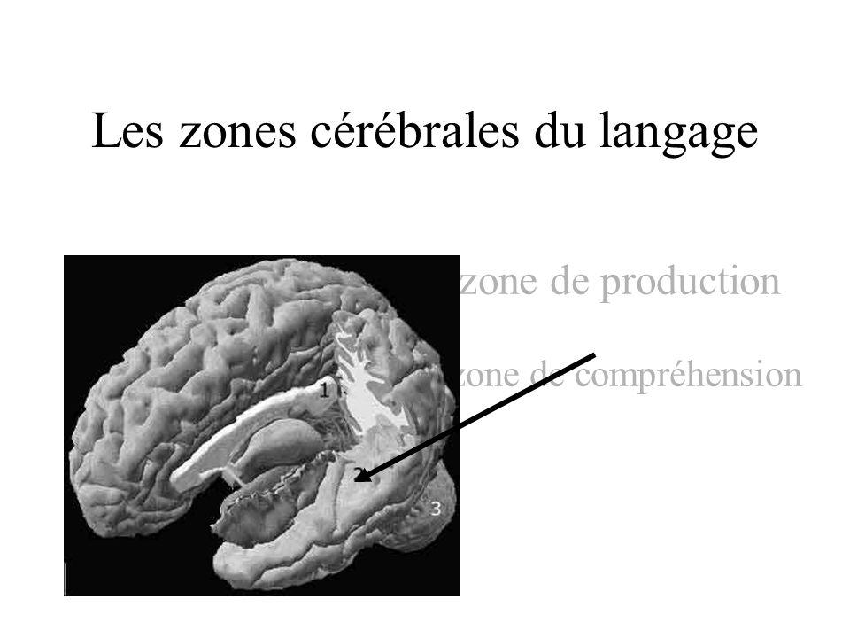 Les zones cérébrales du langage