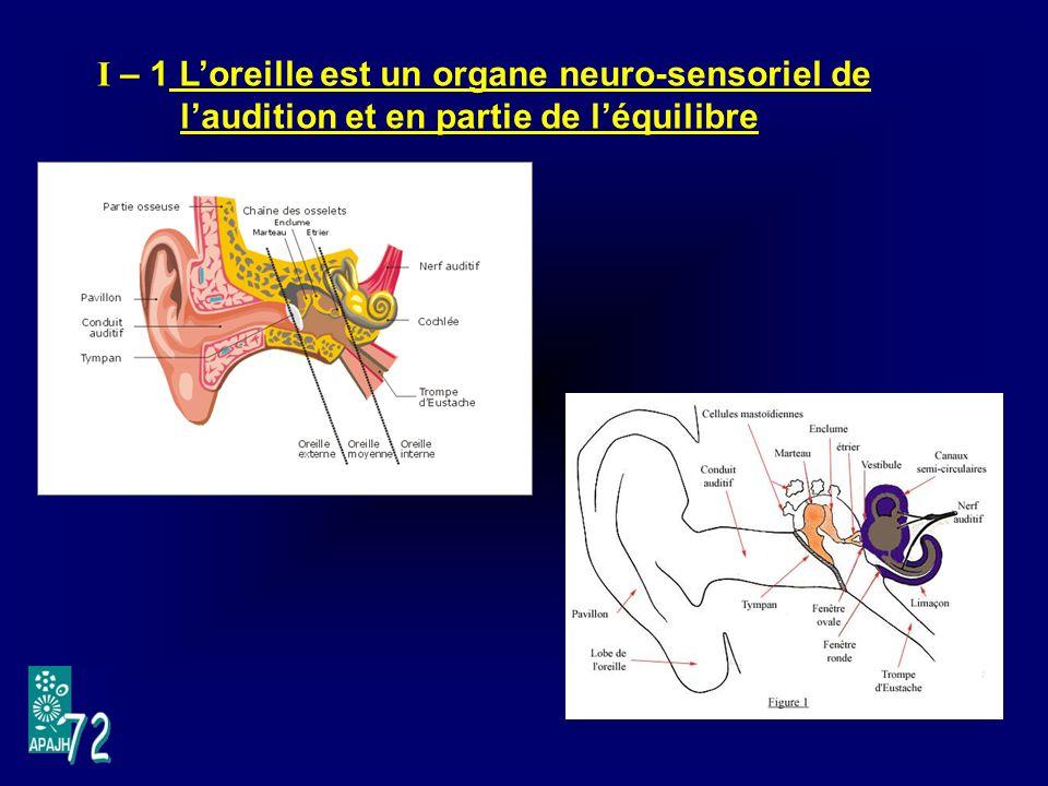 I – 1 L'oreille est un organe neuro-sensoriel de l'audition et en partie de l'équilibre