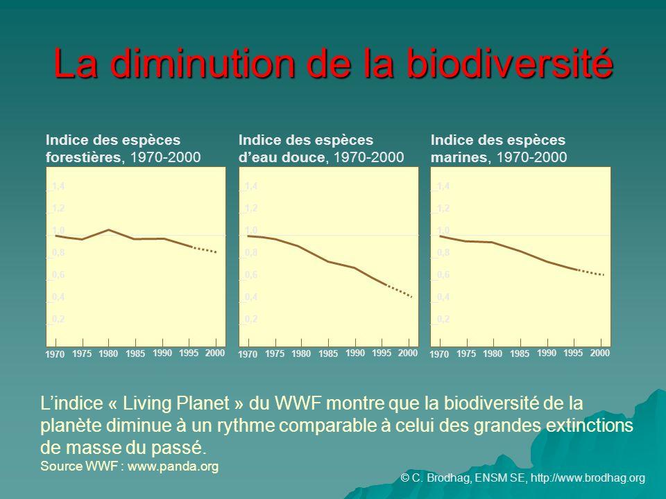 La diminution de la biodiversité