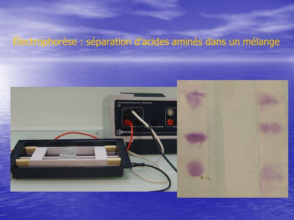 Électrophorèse : séparation d'acides aminés dans un mélange